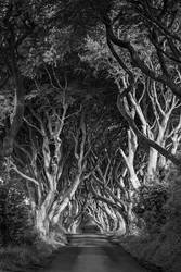 The Dark Hedges by timbodon
