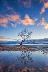 A Tree of Ages by timbodon