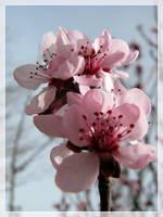 The memories of spring by maska13