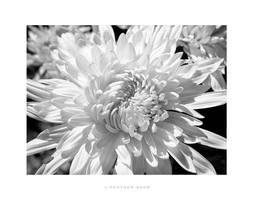Black-white by Nyx-art