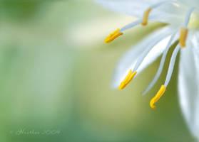 Little flower by Nyx-art