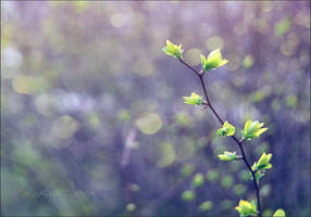 . . Leaf . . by Nyx-art