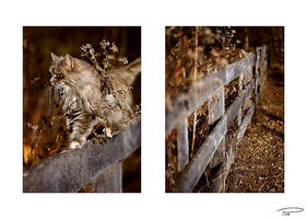 Cat Fence by Photo-Cap