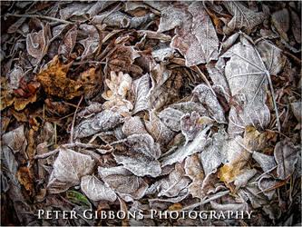 Frosty Leafs by Photo-Joker