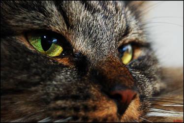 Scythe's Green Eye by Tapola