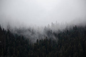 Misty hiding by Laerian