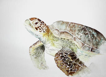 Turtle WIP by jakhont