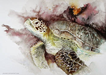 Turtle by jakhont