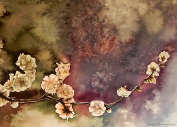 Sakura by jakhont