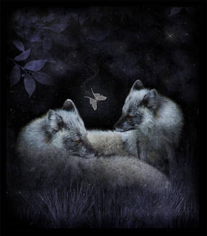 Fox and Luna by saperlipop