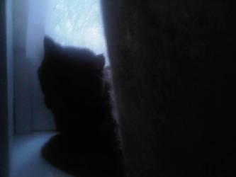 Kitty Shadow by OnyxWillow