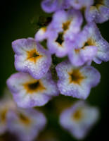 Tiny flowers. by SnapShotDataBase