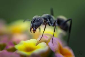 Ant Macro by SnapShotDataBase