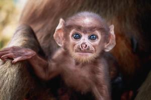Baby Monkey by SnapShotDataBase