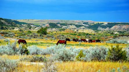 Theodor Roosvelt National park wildlife by CaenRagestorm