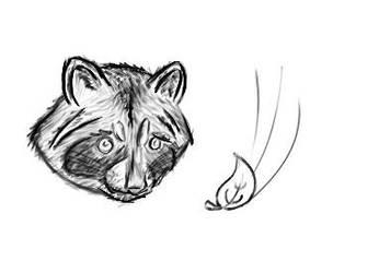Raccoon Head by Tom437