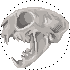 cat skull (free to use) by AkumiIrako