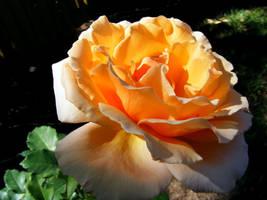 Orange Delight by Dontheunsane