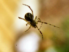 Micro Spider by Dontheunsane
