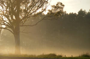 Sunlit Mist by Dontheunsane