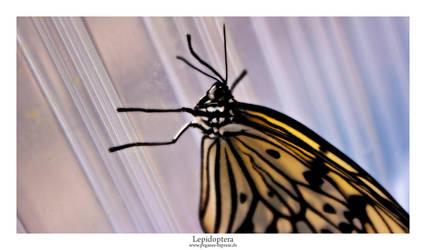 Lepidoptera 03 by Pegasus-Express