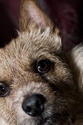 dog face afternoon by Samedi