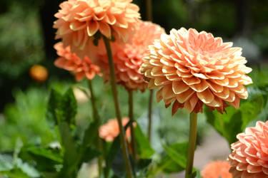 Flowers by Romaji-92