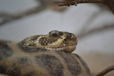 Snake by Romaji-92