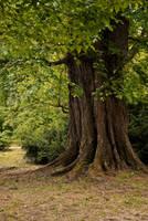 Tree 03 by elanordh-stock