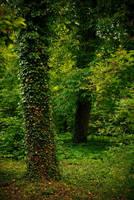 Nature background 11 by elanordh-stock