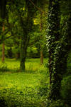 Nature background 14 by elanordh-stock