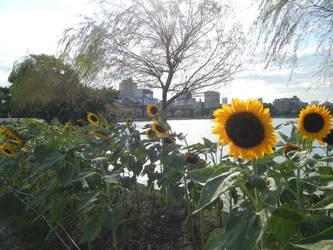 Sunshine In Ohori Park by PsychoGemini