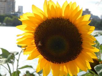 Sun And Honey by PsychoGemini