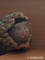 I am watching you! by Itzeflitze