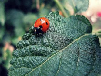 Ladybird. by JellyS4ndwich