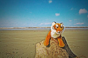 Hobbes at the Beach by caleighblankenship