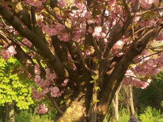 Donaupark tree by MagicalDragon8