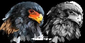 Eagle-buffoon Predator Bird by Kajenna