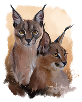 Two big cats Caracal by Kajenna