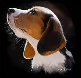 Beagle puppy by Kajenna