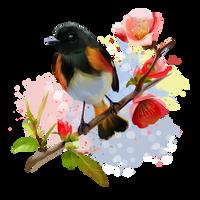 American Redstart bird by Kajenna