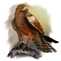 Falcon by Kajenna