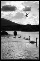 Lough Leane by peitxon