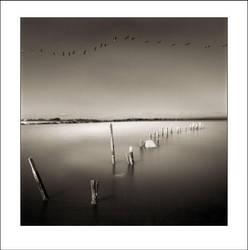 Salton Sea Birds by perry