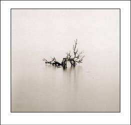 Salton Sea Tree by perry