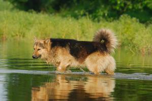 The Dog by Roksolana