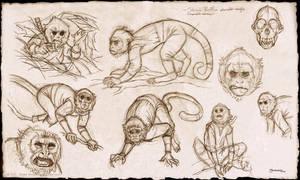 Shinobi Bobo sketches by strickart
