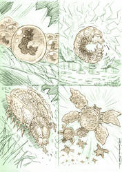 Developmental Stages of the Baconchee Burgerfly(G) by strickart
