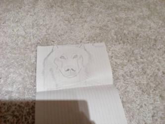 Wolf  by Saniel100