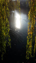 Sundown through a Weeping Willow Curtain by Pit7